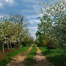 Rural road in spring by Sergieiev