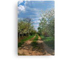 Rural road in spring Metal Print