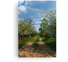 Rural road in spring Canvas Print