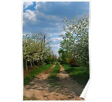 Rural road in spring Poster