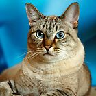 Sweet Cat by mentaldragon