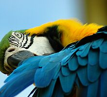 Blue and Gold Macaw by mentaldragon