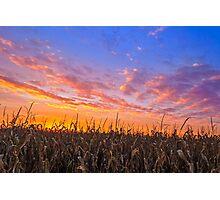 Vibrant Harvest Photographic Print