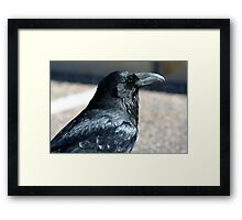 Rio Puerco Raven Framed Print