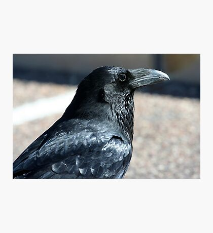 Rio Puerco Raven Photographic Print