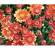 Colorful bunch Photographic Print