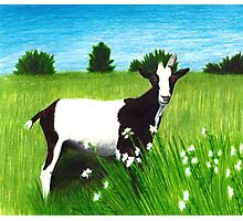 My pet Goat Photographic Print