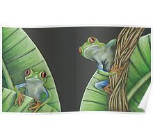 Red Eyed Frogs Poster