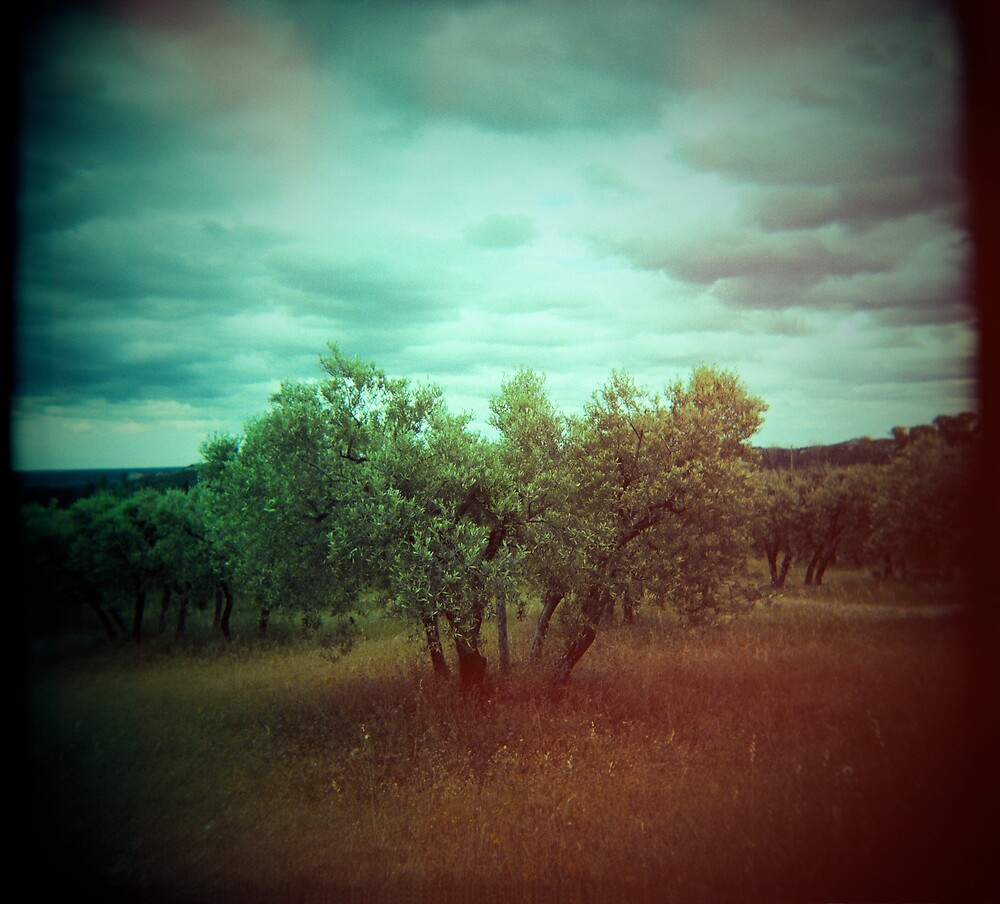 Olive Tree by ezwayout