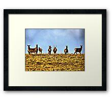 Oh Deer! Framed Print