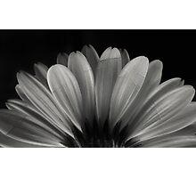 Enlightenment Photographic Print