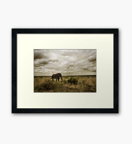 Lone Bull Framed Print