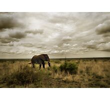 Lone Bull Photographic Print