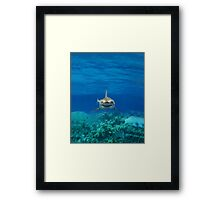 SHARK IPHONE CASE 1 Framed Print