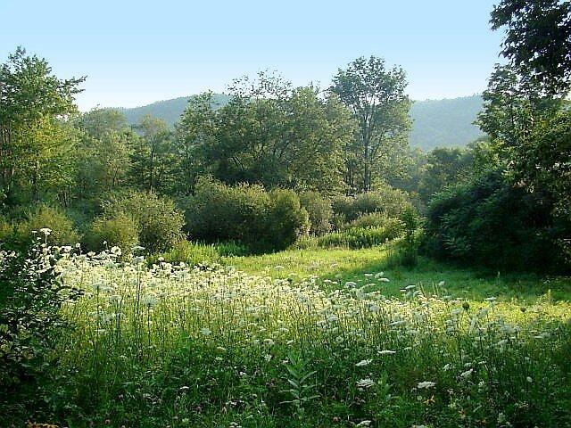 Joy of a Summer's Meadow by Linda Marlowe