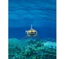 Shark ipad case Photographic Print