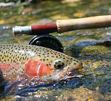 rainbow trout by wildfish