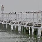 Fog-bound birds - Cameron&#x27;s Bight, Mornington, Victoria, Australia by Keith Stead