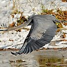 Big for a Snow Bird by Kenneth Haley