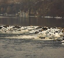 Cold Winter River by NicholeHyde