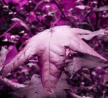Violet Illusion by Ron Alcorn