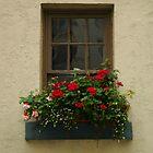 The Window by expatraveler