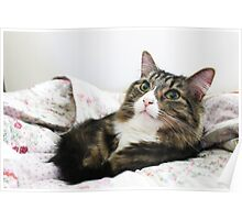Cute Cat Renji Bed Time Poster