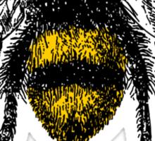 You're BEE-utiful Sticker