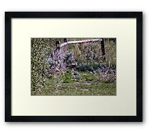 Pheasant Season Framed Print