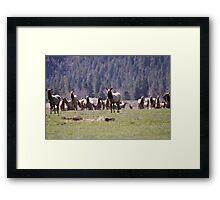 Herd of Elk Framed Print