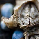 Skeletor by Jared Revell