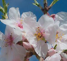 Spring by jhawa