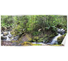 Taggerty River convergence- panorama Poster