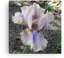 "Median Iris - ""Shameless"" Canvas Print"