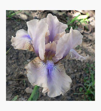 "Median Iris - ""Shameless"" Photographic Print"