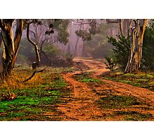 """""""Meandering into the Mist"""" Photographic Print"""