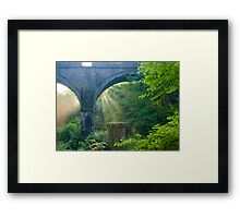 Sunbeams at Plymbridge Woods Framed Print