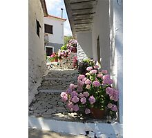 Flowers in an Alley Photographic Print