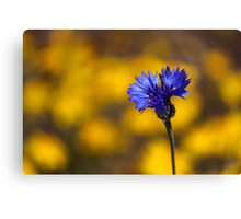 Blue Bachelor Button On Gold Canvas Print