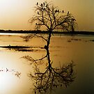 Serene Reflection by Biren Brahmbhatt