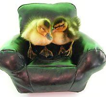 ducks armchair by darren  shaw