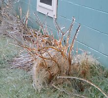Beginning of the Ice Storm 2008 by Naylor