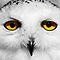 Birds In The Spotlight - Owls Close Up