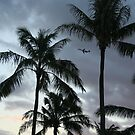 Just plane palm trees by Rhonda  Thomassen