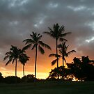 Palm Silhouette by Rhonda  Thomassen