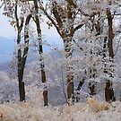 Winter Dreams, most winters I dream of spring by NatureGreeting Cards ©ccwri