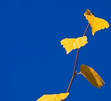 Fall Leaves by expatraveler