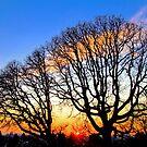 Oak Tree Sunset by Celine Chamberlin