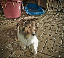 Lassie by Zach  Schible