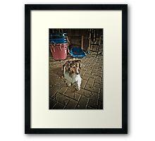 Lassie Framed Print